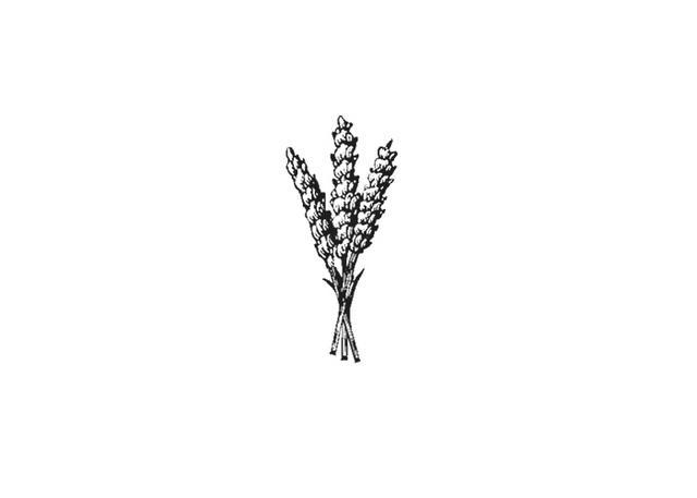 Lavender Illustration Black And White