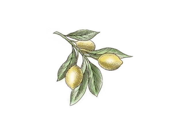 Lemons art Crosshatch