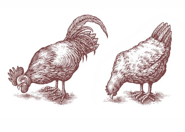 Rooster & Chicken woodcuts