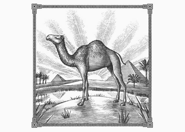 Camel Egyption