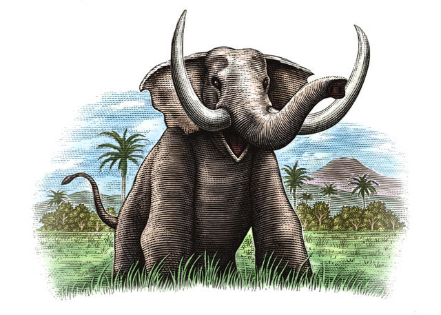 Indonesian Elephant